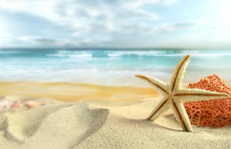playa: Estrella de mar en la playa