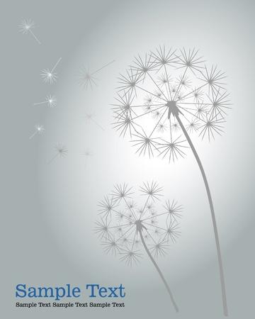pistil: Dandelions.