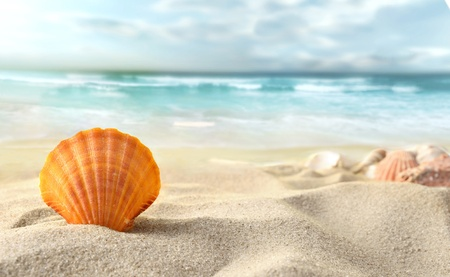 conch shell: Shell on the beach