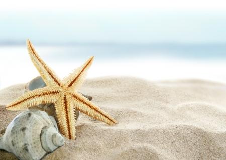 Seesterne am Strand Standard-Bild