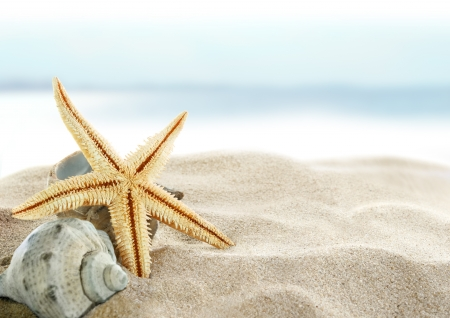 Starfish on the Beach Stock Photo - 11167673