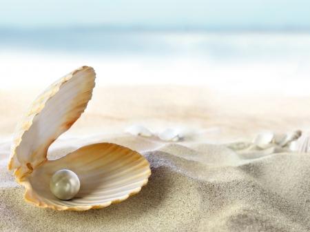 edelstenen: Shell met een parel
