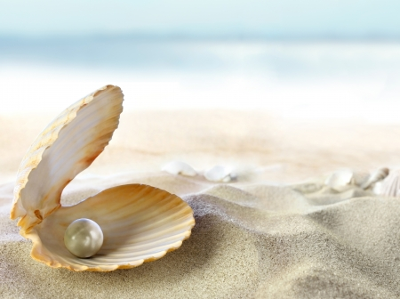Shell with a pearl  photo