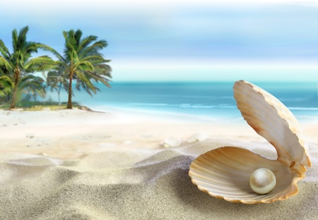 scallop shell: Tropical beach Stock Photo