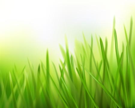 field and sky: Grass. Illustrazione vettoriale.