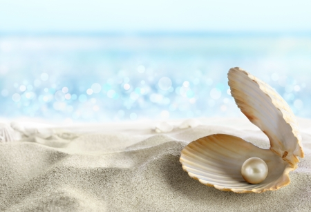 perlas: Shell, con una perla