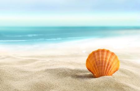 해변에서 쉘