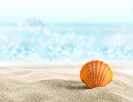 soft object: Shell on a sandy beach Stock Photo