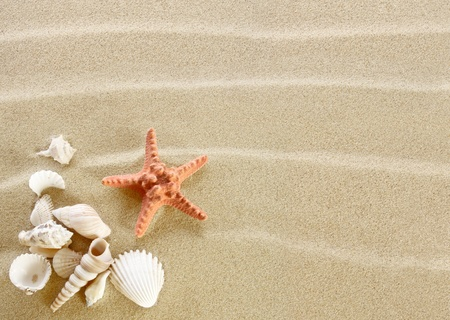 caracolas de mar: Estrellas de mar y conchas en una playa de arena