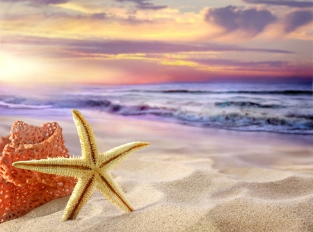 estrella de mar: Tropical Beach
