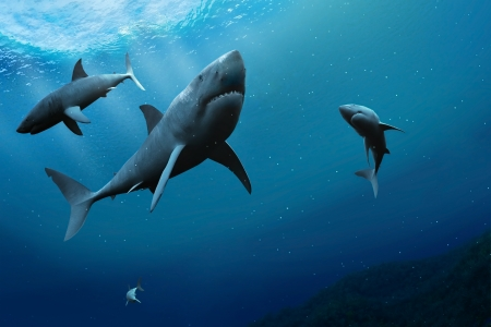 shark teeth: Los tiburones en el mar.