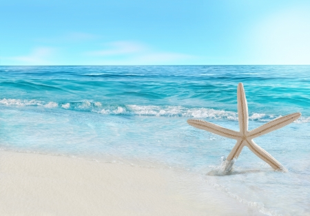 cancun: Starfish and wave  Stock Photo