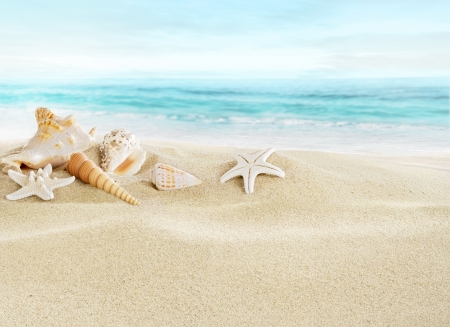 Shells on sandy beach Stock Photo