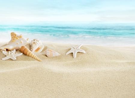 seashores: Shells on sandy beach Stock Photo