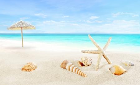 seashores: Tropical resort