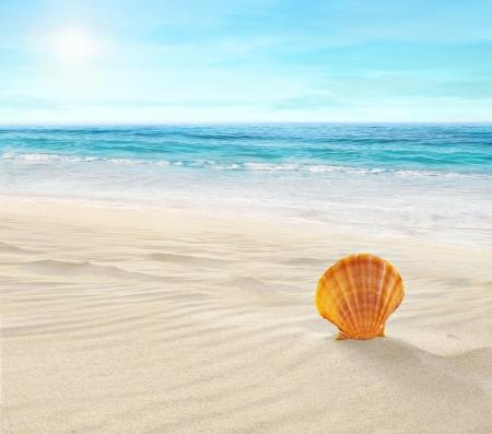 sunshine: Shell en la playa tropical Foto de archivo