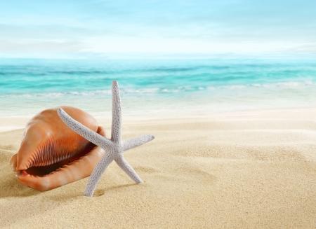 starfish beach: Big shell and starfish on beach
