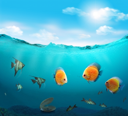 Fishes in the tropical sea  photo