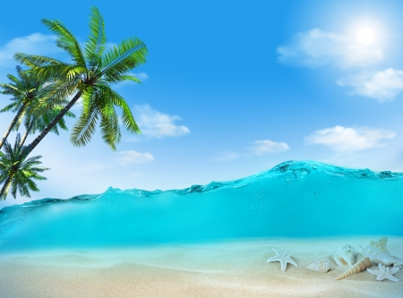 Coquilles sous l'eau