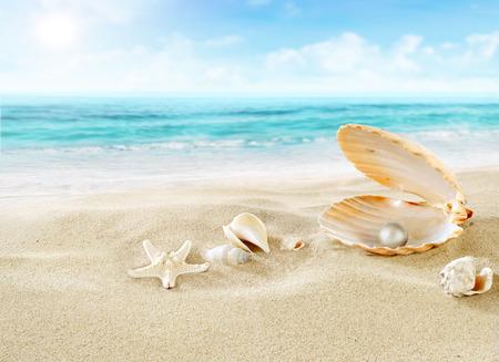 noix saint jacques: Perle sur la plage Banque d'images