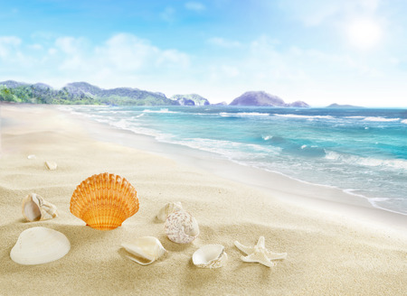 Landscape with shells on sandy beach  Stock Photo