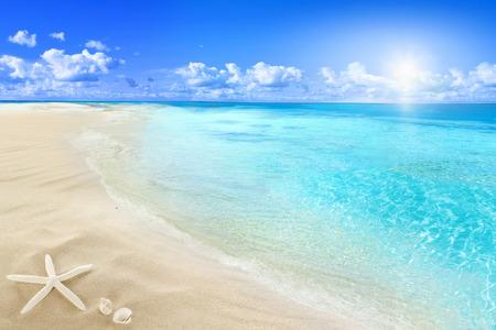 太陽が降り注ぐビーチで貝 写真素材