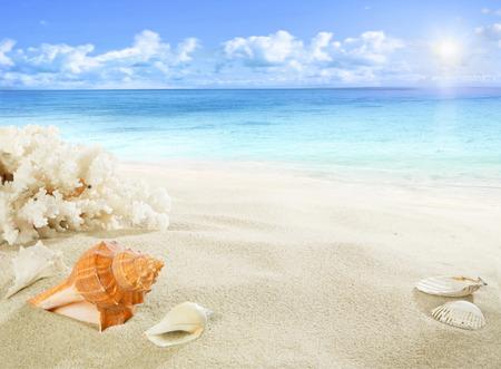 conchas: Conchas y corales en la playa Foto de archivo
