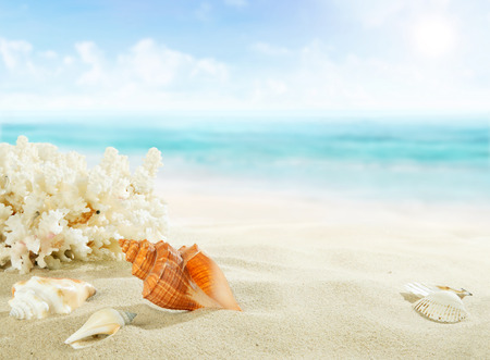 sunny beach: Shells on sandy beach Stock Photo