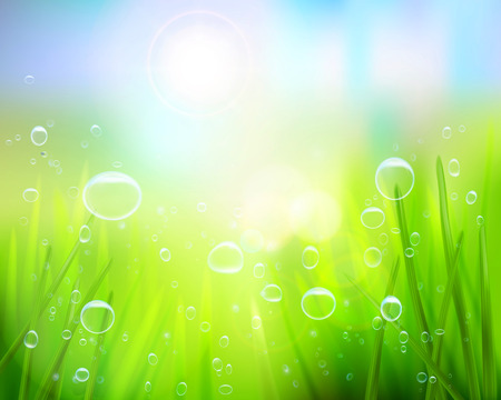 Grass with water drops - Vector illustration