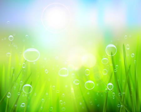 Hierba con gotas de agua - ilustración vectorial