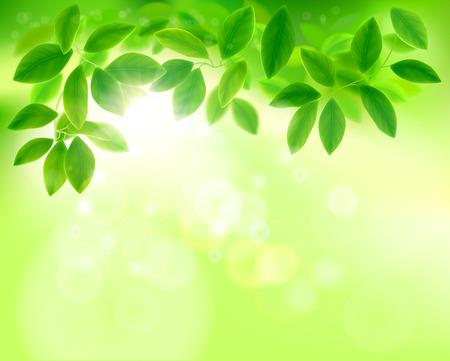 Leaves in sunlight. Vector illustration. Stock Illustratie