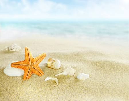 playas tropicales: Estrellas de mar y conchas en la playa de arena Foto de archivo