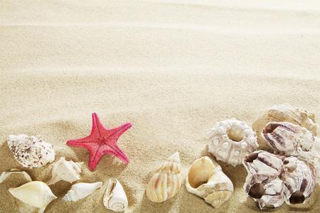 모래에 포탄 스톡 콘텐츠 - 37362853