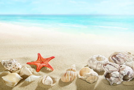 風景: 浜辺で貝