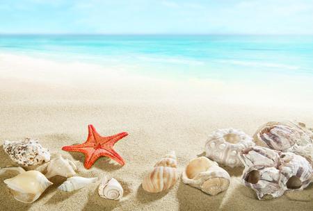 stella marina: Conchiglie sulla spiaggia Archivio Fotografico