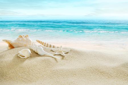 playas tropicales: Conchas en la playa