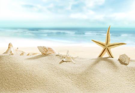 Shells on tropical beach.