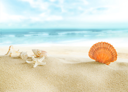 浜辺でカラフルな貝。