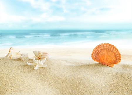 해변에서 다채로운 포탄입니다. 스톡 콘텐츠
