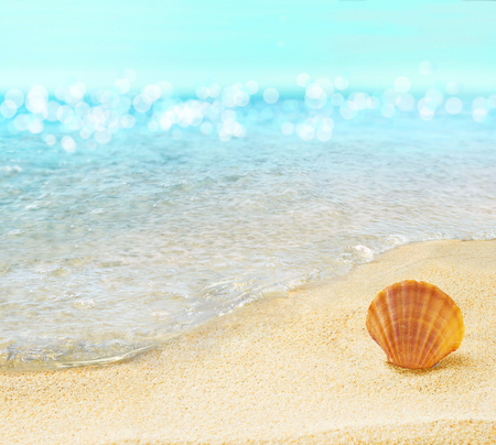 ocean waves: Beach with shell. Stock Photo