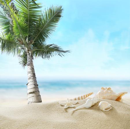 Palm on the beach.