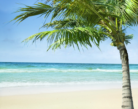 Tropical beach with the palm trees.