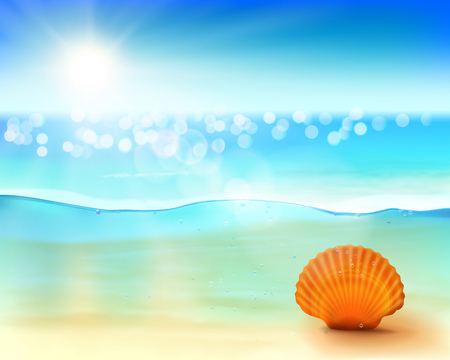 drops of water: Shell in the sea. Vector illustration.