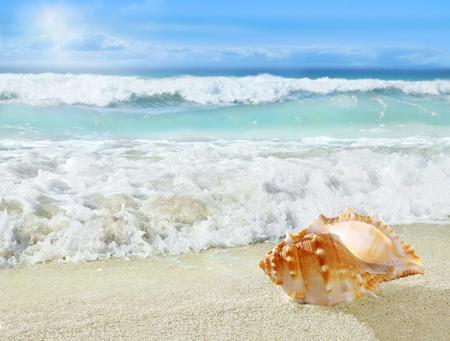 Shell on the beach.