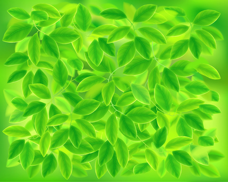 shiny background: Background of green leaves. Vector illustration.