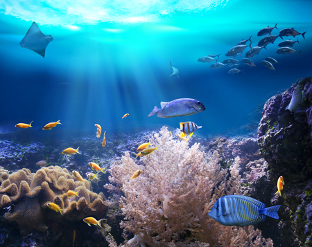 castaway: Reef with marine animals. 3D illustration Stock Photo