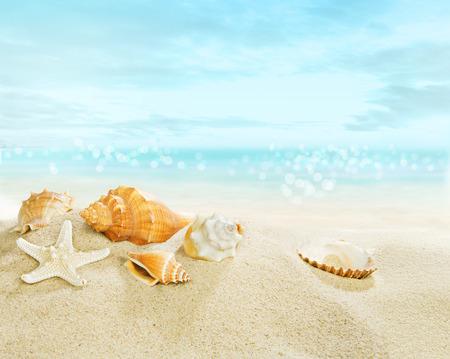 Starfish and shells on the beach.