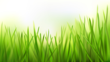 Fresh grass - nature background. Vector illustration. Illustration