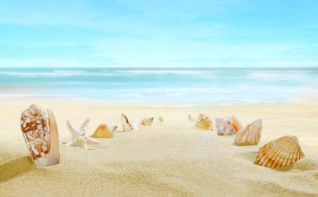 Sandy beach. Path from shells on the sand. Stock Photo