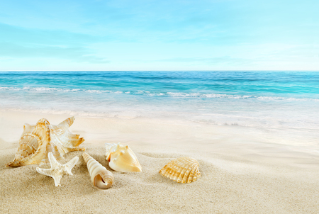 Tropical beach. Shells on the sand. Stock Photo